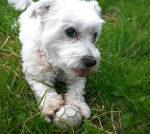 service animal dog_2